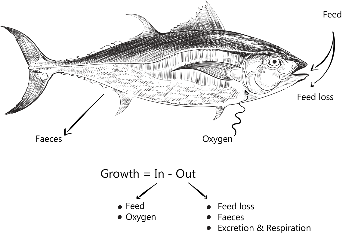 چرخه انرژی در بدن ماهی