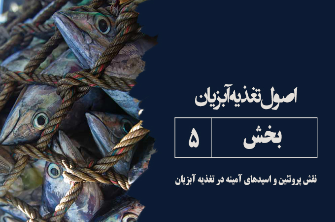 پروتئین و اسید آمینه در تغذیه آبزیان