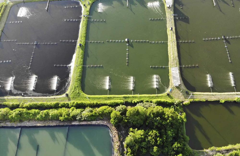کنترل کیفیت آب در پرورش میگو